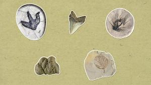 Qu'est-ce qu'un fossile?