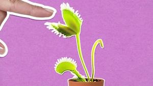 Qu'est-ce qu'une plante carnivore?