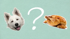 Pourquoi dit-on que les chiens ont du flair?