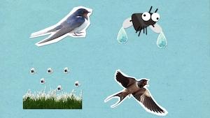 Pourquoi les oiseaux volent-ils bas lorsqu'il va pleuvoir?