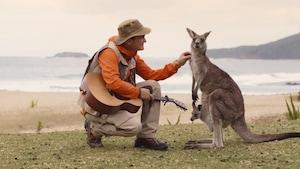 Chanson : Les kangourous