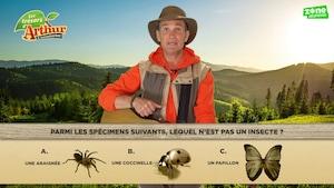 Jeu sur les insectes