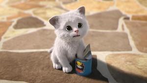 Un chat pas tout blanc