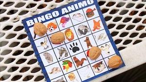 Bingo Animo