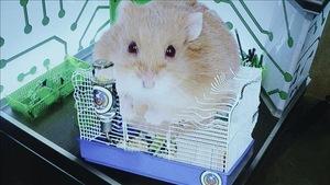 Comment nourrir le hamster de l'OSI
