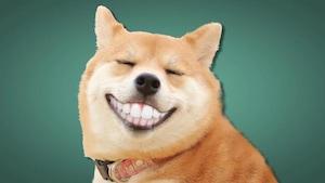 Brosse à dentinateur