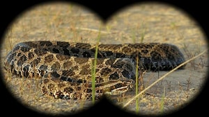 Le serpent s'enroule et se faufile