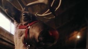 Pourquoi Rudolph a le nez rouge? - Les plus grands secrets