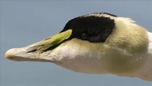 Connais-tu les oiseaux marins?
