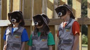 Les impressionnants ours noirs