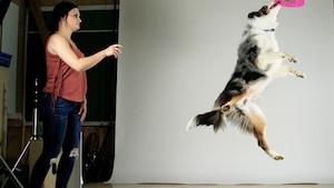 Le souper échappé et la prouesse canine