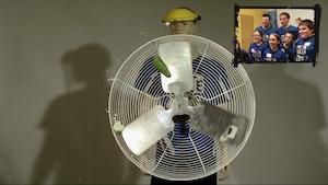 La salade et l'ampoule