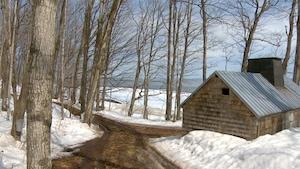 Avec les changements climatiques, les érables pousseront de plus en plus au nord.
