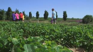 L'équipe marche dans les champs de fraises.