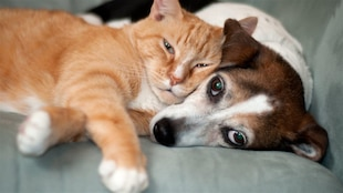 Un chat et un chien se câlinent sur un canapé.