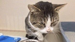 Un chat tient sa patte blessée en l'air, au-dessus d'un bol de nourriture.