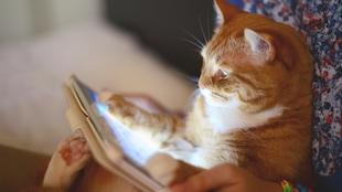 Photo d'un chat jouant sur une tablette.