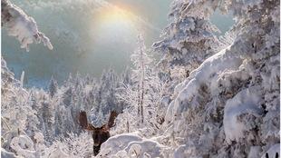 Sans aucune expérience en photographie lors de ses débuts il y a 2 ans, Éric Deschamps est depuis devenu un photographe de nature sauvage reconnu. Cette photo d'un orignal dans le Parc national de la Gaspésie a été prise lors de ses débuts.