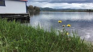 Un terrain en bordure du lac Kénogami