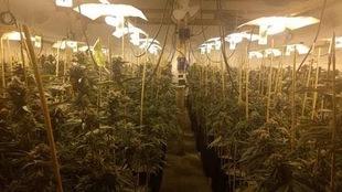 Biotechnologies Ulysse, une entreprise de Trois-Rivières, a développé un fertilisant permettant de stimuler la croissance des plants de marijuana.