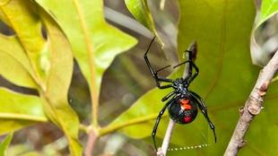 Une araignée.
