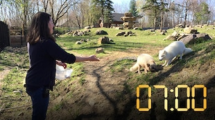 À 7 h 00, c'est l'ouverture du zoo Ecomuseum.