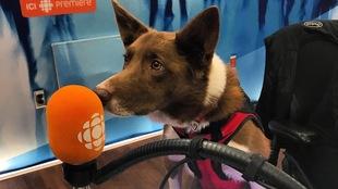 Henry, un chien vedette du plus récent film de Daniel Ferguson.