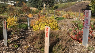 Une partie d'un jardin communautaire d'herbes fraîches à Sudbury. On y voit entre autre du thym qui y pousse allègrement.