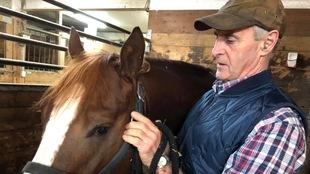 Dans une écurie, un homme et un cheval