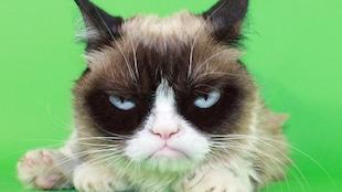 Grumpy Cat, le chat vedette d'Internet.