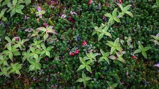 Photo en gros plan de petites plantes et de petits fruits dans la nature.
