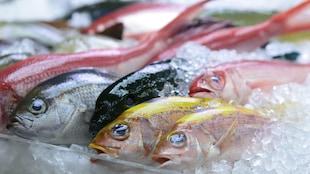 Du poisson sur les étalages