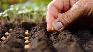 Un homme dépose une graine dans de la terre.