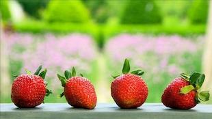Quatre fraises une à côté de l'autre.