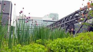 Des plantes et des pousse sous un pont.