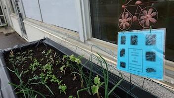 Jardiner pour lutter contre l'insécurité alimentaire