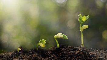 Reprogrammer la photosynthèse pour améliorer les rendements agricoles