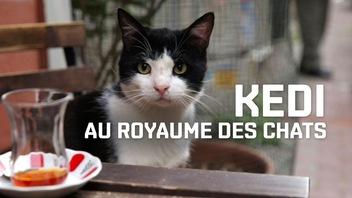 Le trésor d'ICI Tou.tv : <em>Kedi, au royaume des chats</em>, de Ceyda Torun