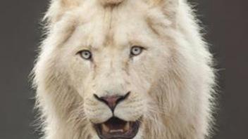 Àgagner :un déjeuner face à face avec les lions le 15 juillet 2018