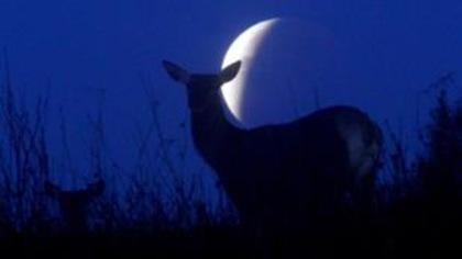 Les animaux sont-ils perturbés par les éclipses?