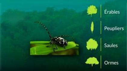 Quels sont les insectes qui ravagent nos forêts?