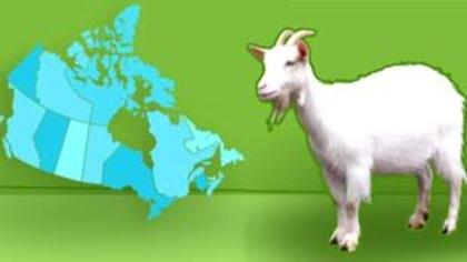 Dans quelle province produit-on le plus de chèvres?