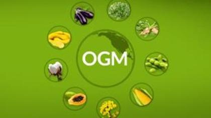 Quels végétaux sont issus d'OGM?