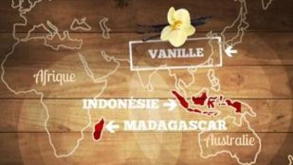 La vanille, cette épice exquise qui nous vient des orchidées