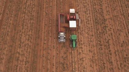 La récolte de patates au Manitoba donne de très bon résultats.