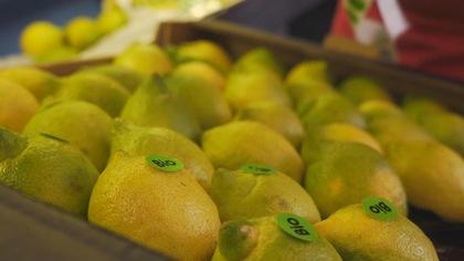 Des citrons étiquetés biologiques dans un étalage.