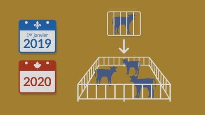 Amélioration d'espace pour les animaux d'élevage au Québec