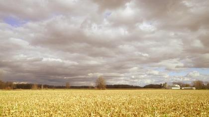 Champs de maïs sous un ciel nuageux.