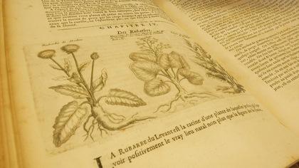 Curieuses histoires de plantes