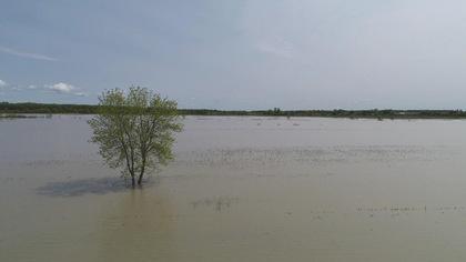 Au printemps pendant les inondations, différentes masses d'eau se rencontrent dans la plaine inondable du lac Saint-Pierre.